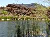 AZ-Superior-Boyce Thompson Arboretum-2002-04-27-0019