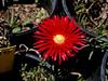 AZ-Superior-Boyce Thompson Arboretum-2002-04-27-0004