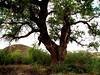 AZ-Riverside-2004-09-19-0001