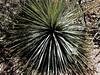 AZ-Superior-Boyce Thompson Arboretum-2002-04-27-0015