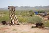 AZ-Apache Junction-Hwy 88-Goldfield-2011-03-19-1057