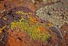 Rick's POTD - Lichen
