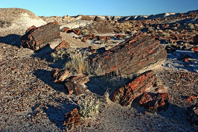 AZ-Petrified Forest National Park-Crystal Forest-2006-11-11-0006