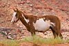 AZ-Monument Valley Area-2008-09-01-0009<br /> <br /> Indian Horse on the Reservation