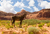AZ-Monument Valley Area-2008-09-01-0007<br /> <br /> Indian Horse on the Reservation