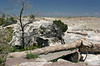 AZ-Petrified Forest National Park-Agate Bridge-2005-05-22-0001