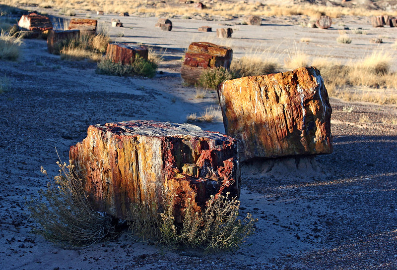 AZ-Petrified Forest National Park-Crystal Forest-2006-11-11-0001