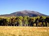 AZ-Flagstaff-San Francisco Peaks-2003-10-10-0006