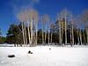 AZ-Flagstaff-2005-02-05-2001