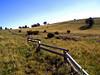 AZ-Flagstaff-San Francisco Peaks-2003-10-10-2002