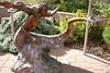 AZ-Sedona-Art-2005-11-05-0009