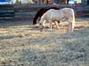 AZ-Phoenix-2004-12-14-0003