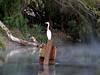 AZ-Phoenix-2004-11-15-0001