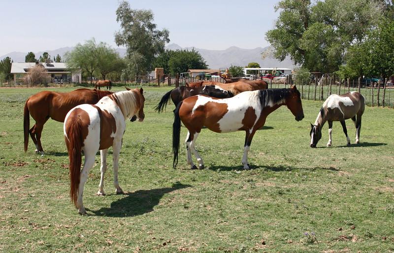 AZ-Phoenix-Steve's Horses-2006-07-16-0007