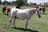AZ-Phoenix-Steve's Horses-2006-07-16-0004