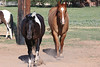 AZ-Phoenix-Steve's Horses-2006-07-10-0004