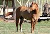AZ-Phoenix-Steve's Horses-2006-07-10-0001
