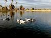 AZ-Phoenix-Aguila Golf Course-Alvord Lake-2002-02-11-0004