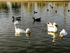AZ-Phoenix-Aguila Golf Course-Alvord Lake-2002-02-11-0003