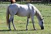 AZ-Phoenix-Steve's Horses-2006-07-10-0003