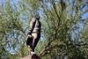 AZ-Phoenix-Wesley Bolin Memorial Plaza-Lt Frank LukeJr-2005-10-10-0001
