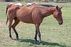 AZ-Phoenix-Steve's Horses-2006-07-16-0002