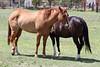 AZ-Phoenix-Steve's Horses-2006-07-16-0003