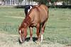AZ-Phoenix-Steve's Horses-2006-07-10-0002