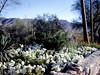AZ-Phoenix-South Mountain Park-1971-06-15-S0002