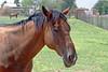 AZ-Phoenix-Steve's Horses-2006-07-16-0008