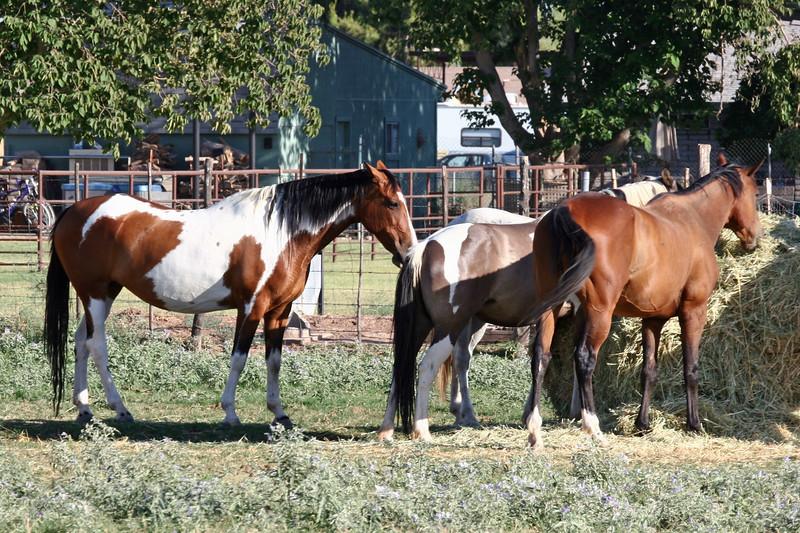 AZ-Phoenix-Steve's Horses-2006-07-10-0005
