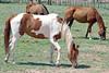 AZ-Phoenix-Steve's Horses-2006-07-16-0001