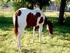 AZ-Phoenix-2004-09-23-0001