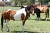 AZ-Phoenix-Steve's Horses-2006-07-16-0006