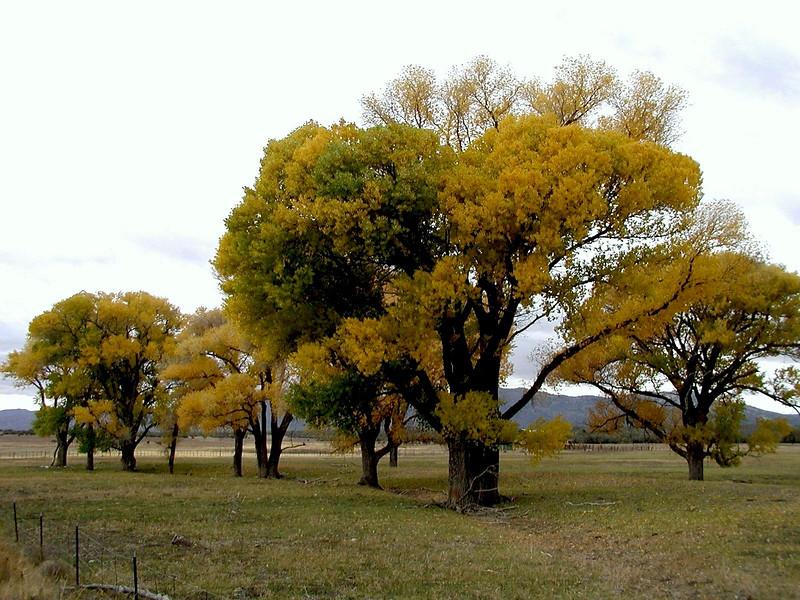 AZ-Peebles Valley-2002-08-24-0003