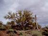 AZ-Castle Hot Springs-2004-02-28-0017