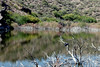 AZ-Lake Pleasant-2006-004-30-0008