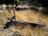 AZ-Lake Pleasant-Area-2004-10-03-0004