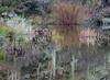 AZ-Lake Pleasant-2005-02-21-0002