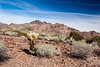 Yuma, AZ-Kofa National Wildlife Refuge 2013-02-02-109