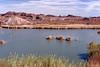 AZ-Yuma-Martinez Lake-Imperial Wildlife Refuge-Smoke Tree Point-2006-02-01-0006