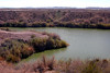 AZ-Yuma-Martinez Lake-Imperial Wildlife Refuge-Ironwood Point-2006-02-01-0009