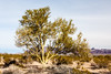 Yuma, AZ-Kofa National Wildlife Refuge 2013-02-02-102