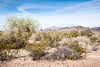 Yuma, AZ-Kofa National Wildlife Refuge 2013-02-02-106