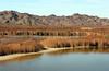 AZ-Yuma-Martinez Lake-Imperial Wildlife Refuge-Mesquite Point-2006-02-01-0006