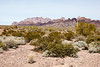 Yuma, AZ-Kofa National Wildlife Refuge 2013-02-02-105