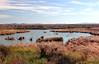 AZ-Yuma-Martinez Lake-Imperial Wildlife Refuge-Smoke Tree Point-2006-02-01-0009
