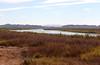 AZ-Yuma-Martinez Lake-Imperial Wildlife Refuge-Smoke Tree Point-2006-02-01-0010