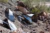 Yuma, AZ-North Star Company 2013-02-02-105