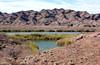 AZ-Yuma-Martinez Lake-Imperial Wildlife Refuge-Smoke Tree Point-2006-02-01-0001